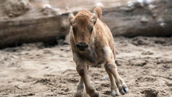 Geldsegen aus Amerika: 22 Millionen für Kölner Zoo