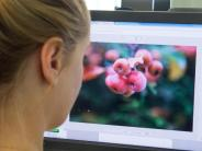 Alternativen zu Photoshop: Browser statt teurer Software: Fotos online bearbeiten
