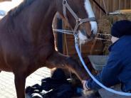 Aislingen/Lauingen: Pferde-Therapie - von der Donau bis nach Dubai