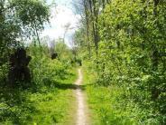 Tourismus: Lauingen sagt Ja zum Auwald-Wanderweg