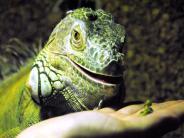 : Das grüne Reptil im Wohnzimmer