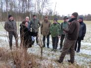 Waldbegang: Eschentriebsterben bereitet Sorgen