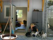 Pilzinfektion: Ein Katzenhaus im Höchstädter Tierheim ist noch zu