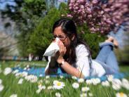 Gesundheit: Wenn Pollen den Atem rauben
