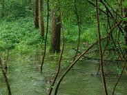 : Der bayerische Amazonas
