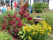 Landkreis Dillingen: Hier können Sie sich Tipps für die Gartengestaltung holen