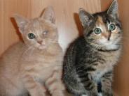 Kreis Dillingen: Wenn kleine Kätzchen leiden
