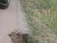 Biber: Und plötzlich klafft da ein großes Loch in der Straße