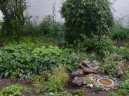 Projekt: Eine Grünfläche erblüht