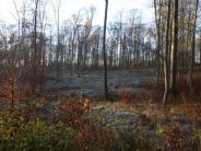 Debatte: Werden zu viele alte Bäume abgeholzt?