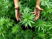Nördlingen: Drogendeal als Familien-Vorsorge
