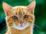 Tierwohl: Warum es so wichtig ist, seine Katze kastrieren zu lassen