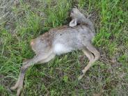 Rain: Freilaufender Hund tötet Rehkitz