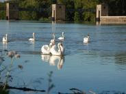 Umweltschutz: Unterer Lech soll ökologisch umgebaut werden