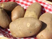 Gift: Warum man grüne Stellen auf Kartoffeln nicht mitessen sollte