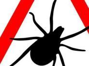 Gesundheit: Mehr Krankheiten durch Zecken in diesem Jahr