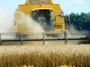 : Ernte: Die Bauern haben mit mehr gerechnet