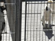 Betreuung: Wenn das Haustier zur Last wird