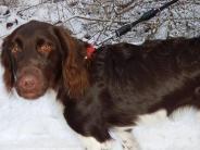 Donauwörth: Wenn ein Hund wildert