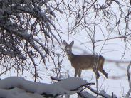 Wetter: Was die Kälte für die Wildtiere bedeutet