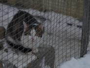 """Tiere: Tierheim Hamlar sagt herzlich""""Danke"""""""