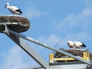 Unterallgäu: Der neue Storchen-Kran ist ausgebucht