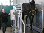Wirtschaft: Von Großsorheim in die ganze Welt: Laufbänder für Pferde