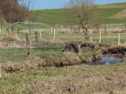 Artenschutz: Ufergehölz ist wertvoll für viele Tiere