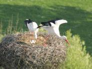Natur: Erneutsechs Eier auf dem Dach vonHeilig Kreuz