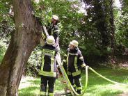 Donauwörth: Zündler präpariert Bäume mit brennbarem Material