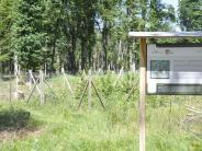 Monheim: Wenn ein Wald neu strukturiert wird