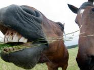 Donau-Ries: In einem Pferdestall ist ein gefährliches Virus ausgebrochen