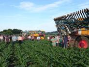 Landwirtschaft: Was Bauern beim Düngen mit Gülle wissen müssen