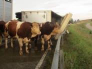 Donau-Ries: Anhänger mit 17 Rindern kippt um