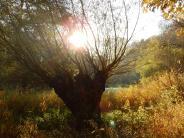 Landkreis: Nationalpark: Privatflächen nur mit Zustimmung