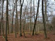 Landkreis Donau-Ries: CSU-Fraktion informiert sich über Nationalpark