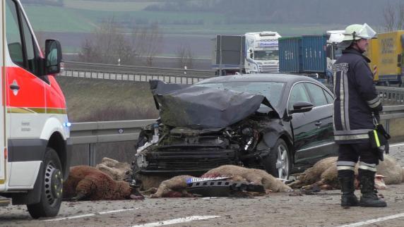 Autofahrer bei Harburg rast in Schafherde