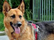 : Frau wird in Kissing durch Hundebiss verletzt