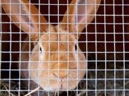 Viruserkrankung im Wittelsbacher Land: Die Kaninchenpest ist ausgebrochen