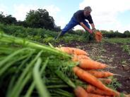 Region Augsburg: Trend Urban Gardening: Die Beete boomen