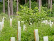 Polizeireport Ried: Unbekannter stiehlt 500 Baumsetzlinge