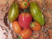 Garten-Kolumne: Tomaten auf den Augen