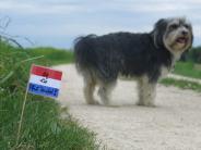 Friedberg: Fähnchen markieren Hundekot in Friedberg