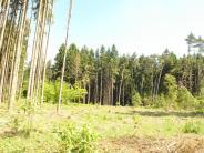 Natur im Wittelsbacher Land: Borkenkäfer: 23 Fichten sind schon tot