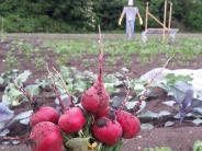 Gärtnern in Friedberg: Pflanzenfreude: Was wo gut gedeiht