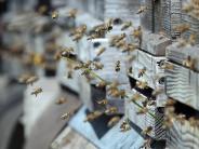 Serie: Alle fliegen auf Bienen