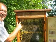 Serie: Wie Bienen leben und Honig entsteht