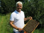 Serie: Bienen in Gefahr