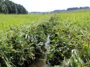 Umwelt: Fische sterben nach Panne in Biogasanlage