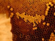 Polizei: Unbekannter stiehlt Bienenstock